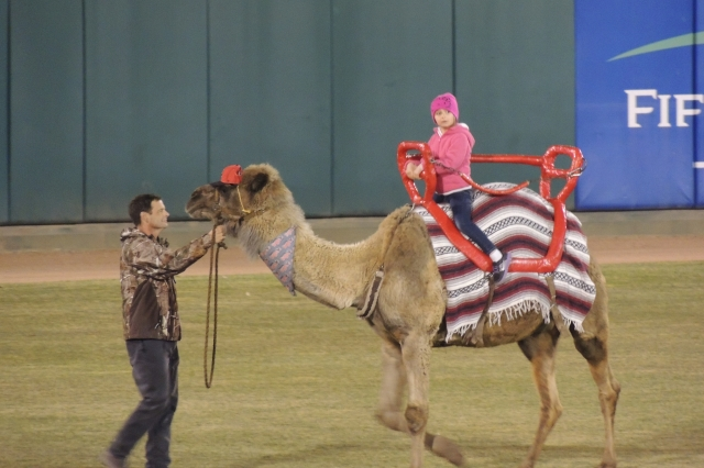 A young fan rides Humphrey the camel in the outfield.