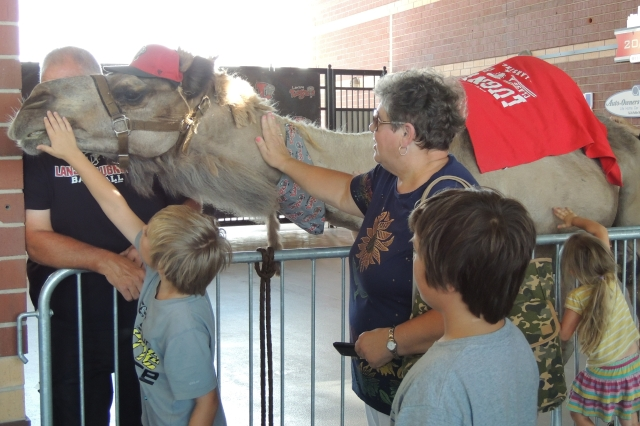 People of all ages were eager to visit Humphrey the Camel.